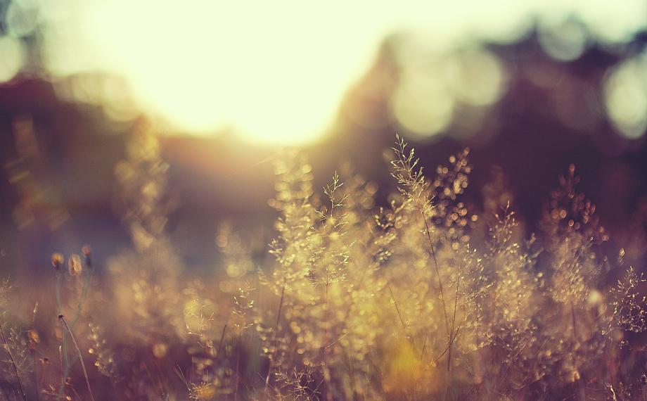 sun rise wisker
